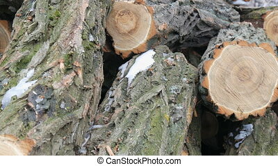 Many of felled tree trunks lying in row - Many of felled...