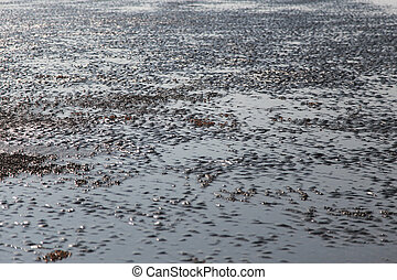 many of red crab on beach in the sea