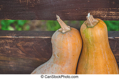Many orange pumpkins on wooden background with copy space, autumn harvest, Halloween or Thanksgiving concept