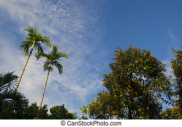 many palm trees against a blue sky