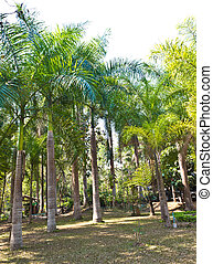 many palm trees in the park