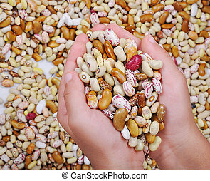 Many pieces and many kind of beans in hands, wallpaper, ...