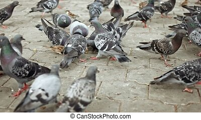 Many pigeons and sparrows fight for food