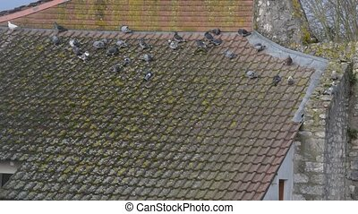 Many pigeons sitting on tiled roof of a house