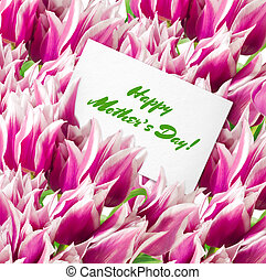 Many pink tulips with card