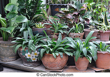 Many plant-pot for house decoration