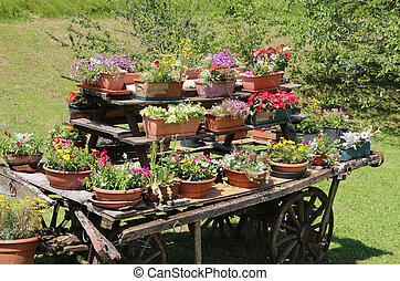 many pots of flowers in the chariot
