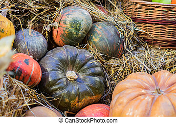 many pumpkins in a hay, autumn background, selective focus