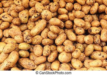 many raw potato - food background