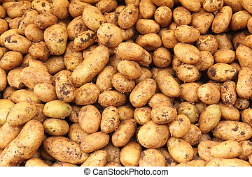many raw potato - food background