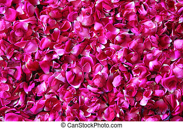 red rose petals background