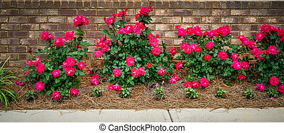 Red Roses on Brick Wall