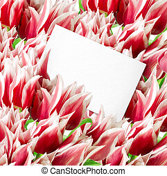 Many red tulips with card