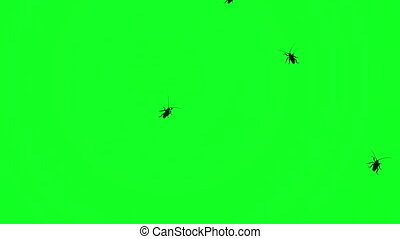 Many roaches beetle insects on green screen