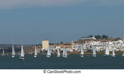 Many Sailing Yachts Moving in the Bay