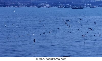 Many seagull flying in sea, Tourists