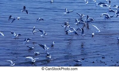 Many seagull flying in sea,beach.