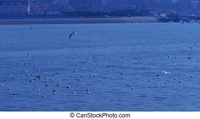 Many seagull flying in sea,reef,Seaside dams of QingDao...
