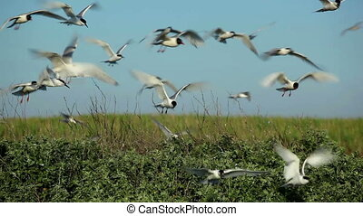 many seagulls circling over their nests 9