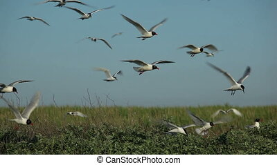 many seagulls circling over their nests 3
