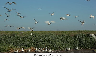 many seagulls circling over their nests 7