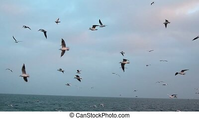 Many seagulls fly by sea