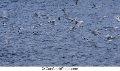 Many seagulls flying over blue water of sea
