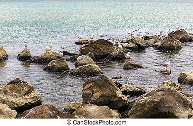 Gulls on the stones