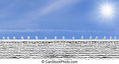 Many seagulls perched on a wooden roof
