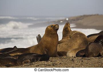 seal at the beach