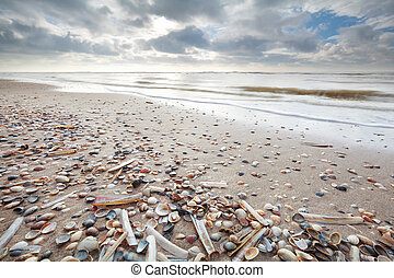 many shell on sand beath at low tide