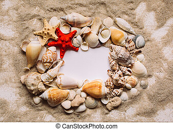 Many shells and red starfish are lying on the sand. Blank white background with place for text. Top view.