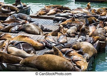 Many Sleeping Seals
