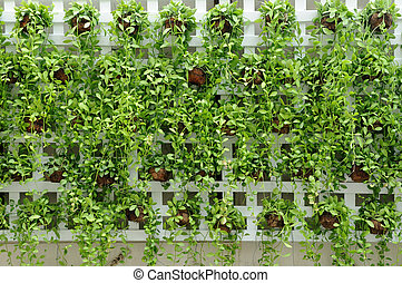 Many small plants hanging on wood wall.