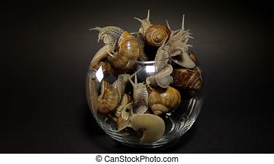 Many snails crawl out of a glass vase. - Snails crawl out of...