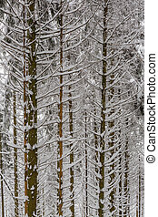 snow and ice covered tree trunks in winter forest