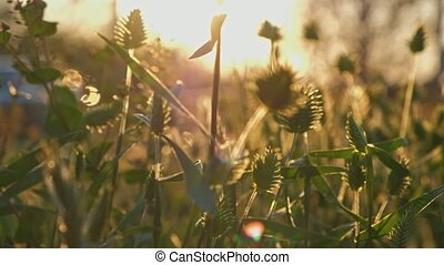 Many species of wild grass view in sunset light real-time ...