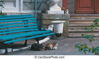 Many stray cats sitting near a bench in the park. Different...
