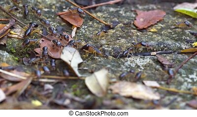 Many Terrestrial Termites, Foraging on the Surface - Dozens...