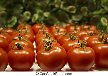 Many tomatoes lie in rows