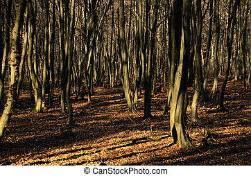 many trees in forest and winter