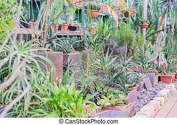 many various cacti and succulents dispayed in botanical garden.
