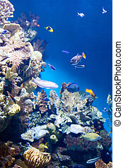 Many various fish on background of a coral reef in aquarium