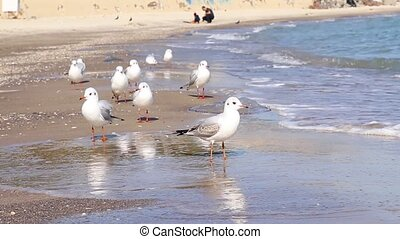 Many big seagulls birds on the seashore in sunny summer
