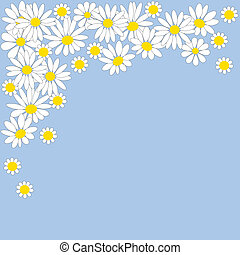 Many white daisies on a blue backgr