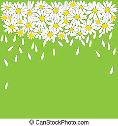 white daisies on a green backg