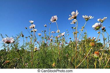 Many White Flowers