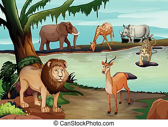 Many wild animals living by the pond