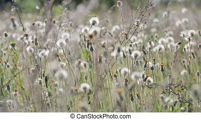 Many wildflowers move in the wind