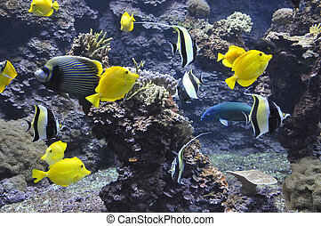 Many Yellow Tropical Fishes in Aquarium